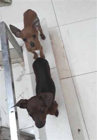 Bệnh viện thú y Animal care - áo ấm, vòng cổ cho chó mèo
