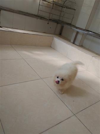 Nhận chăm sóc chó mèo ngày tết - phòng khám thú y Hà Nội
