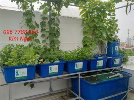Khay nhựa trồng rau, nuôi cá hữu cơ Lhe 0967788450 Ngọc