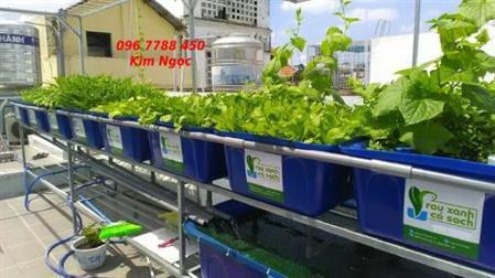 Khay nhựa 100 lít trồng rau Oganic Lhe 0967788450 Ngoc