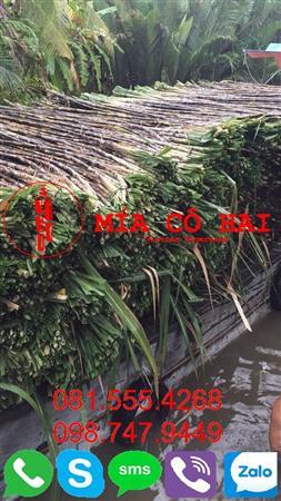 Mía Cô Hai chuyên cung cấp Cần Thơ 0815554268
