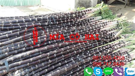 Mía Cô Hai chuyên cung cấp Mía Tím 0815554268