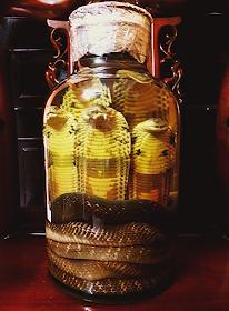 Rượu rắn món quà biếu ý nghĩa nhất
