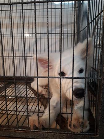 Phòng khám thú y424 Thụy khuê, thiến chó mèo