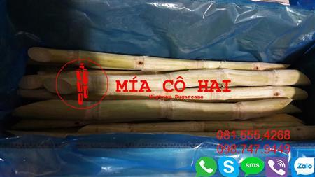 Mía Cô Hai chuyên cung cấp Mía Xuất Khẩu 0815554268