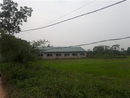 Gia đình cần thanh lý gấp trang trại chương mỹ dt 15700m2 có 2000m chuồng trại, 7000m2 ao, vườn cây giá 3,5 tỷ.