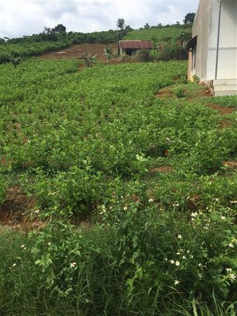 Bán đất nghỉ dưỡng Lâm Đồng