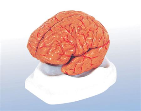 Đau nửa đầu, bệnh  rối loạn tuần hoàn  não và thuốc điều trị